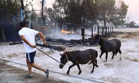 Ο Δήμος Γαλατσίου παραχωρεί χώρο για φιλοξενία ζώων από τις πυρόπληκτες περιοχές