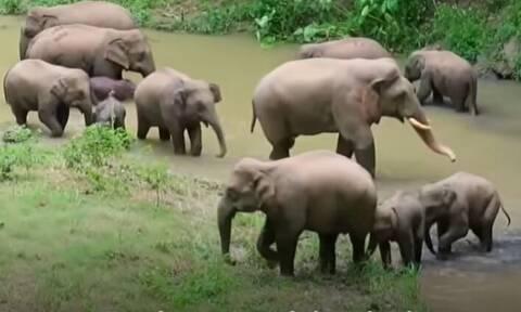 Κίνα: Χιλιάδες άνθρωποι εκκένωσαν τα σπίτια τους για να περάσει κοπάδι με περιπλανώμενους ελέφαντες