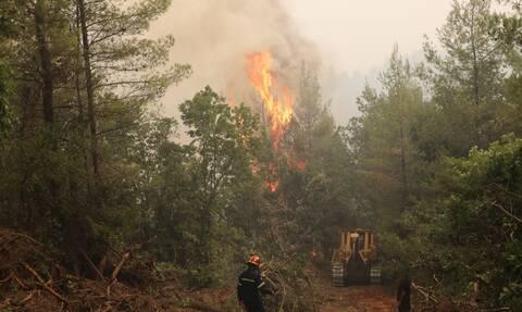 Εύβοια- πυρκαγιές: 300.000 στρέμματα δάσους έχουν καταστραφεί ολοσχερώς-Λέκκας: Τα ξεχνάμε από δάσος