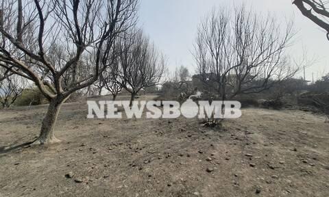 Το Newsbomb.gr στην Αρκαδία: Όλεθρος από τη φωτιά στα χωριά που πέρασε το μέτωπο