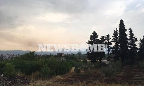 Φωτιά ΤΩΡΑ: Τρία μέτωπα στην Αταλάντη - Έκκληση του Δήμου προς τους κατοίκους για βοήθεια