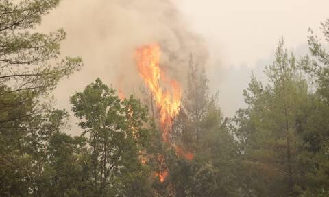 Φωτιά τώρα: Πυρκαγιές σε Μάνδρα και Πόρτο Γερμενό