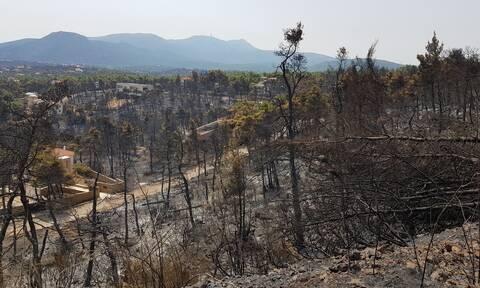 Φωτιές στην Ελλάδα - Πυρόπληκτοι: Πότε θα ανοίξει η πλατφόρμα για τις αποζημιώσεις