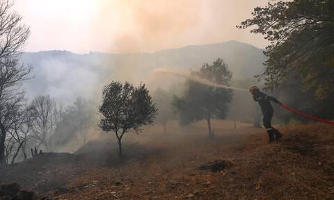 Φωτιά ΤΩΡΑ στη Σιθωνία Χαλκιδικής - Καίει δασική έκταση