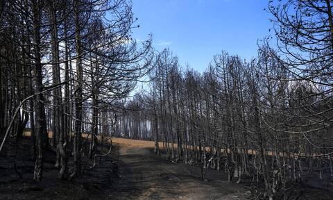 Φωτιές στην Ελλάδα: Κρίσιμα τα επόμενα τρία χρόνια – Γιατί θα χάσουμε τα δάση αν καούν ξανά