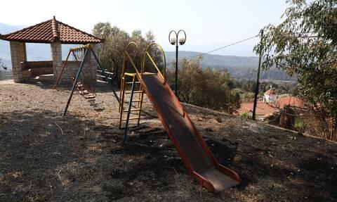 Καμένα στη φωτιά στην Ηλεία