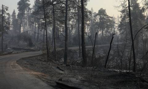 Πυρκαγιές: Μέσα σε 30 μέρες θα κηρύσσονται όλες οι καμένες περιοχές αναδασωτέες