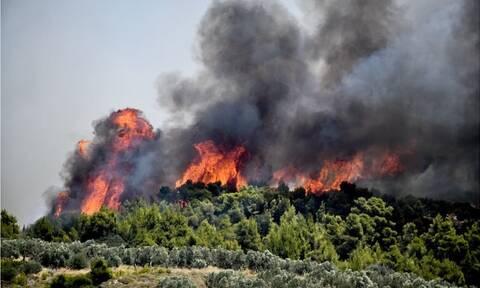 Πολύ υψηλός κίνδυνος πυρκαγιάς για την Κυριακή (15/8) - Ποιες είναι οι «πορτοκαλί» περιοχές