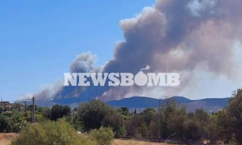 В Греции лесные пожары охватили юго-восточную Аттику