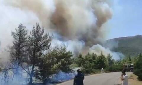 Φωτιά στα Βίλια: Εκκενώνονται οι οικισμοί Άγιος Γεωργιος και Παλαιοχώρι – Μήνυμα από το 112