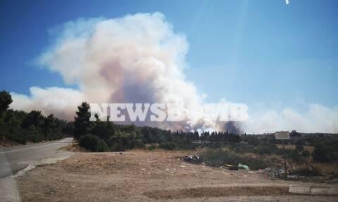 Φωτιές - Πατούλης: Χρειάζονται περισσότερα εναέρια μέσα στα Βίλια - Επεκτείνεται γοργά το μέτωπο
