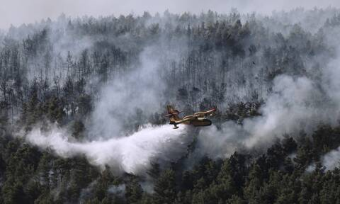 Bίλια - Κερατέα: 50.000 στρέμματα έγιναν στάχτη από τις φωτιές - Τεράστια οικολογική καταστροφή