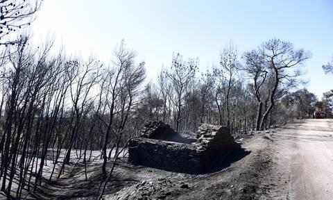 Πατούλης: Μεγάλες οι περιβαλλοντικές καταστροφές στην Αττική – Ανοιχτό το ενδεχόμενο εμπρησμού
