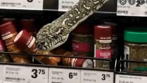 Αυστραλία: Φίδι «πετάχτηκε» μέσα από το ράφι σούπερ μάρκετ στο Σίδνεϊ (video)