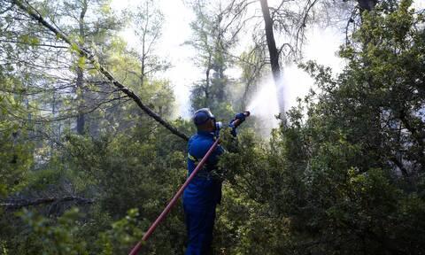 Φωτιά στα Βίλια: Ελέγχθηκε το μεγαλύτερο κομμάτι προς Μέγαρα – Συνεχής η μάχη με τις αναζωπυρώσεις