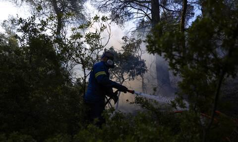 Βίλια: Οριοθετήθηκε η φωτιά - Σε επιφυλακή οι πυροσβεστικές δυνάμεις