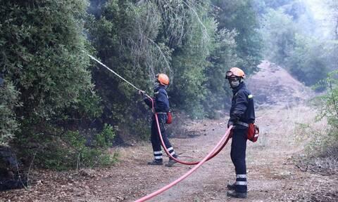 Εύβοια: Πυρκαγιά στο Μετόχι Καρύστου