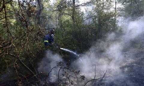 Φωτιά - Κάρυστος: «Υπό έλεγχο η φωτιά στο Μετόχι» λέει ο δήμαρχος