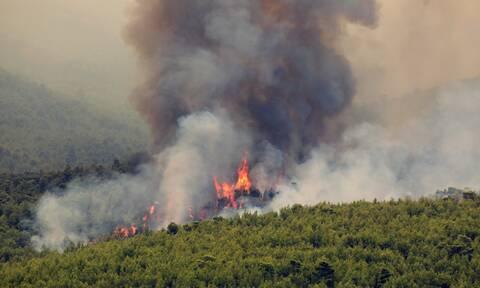 Φωτιά στη Ζάκυνθο: Ελεύθερος αφέθηκε ο αλλοδαπός που προσήχθη για την πυρκαγιά στο Αργάσι