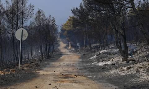 Πάνω από 94.000 στρέμματα η καμένη γη στη δυτική Αττική