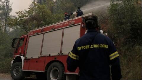Τέλος το κυνήγι στις περιοχές που επλήγησαν από φωτιές - Τι προβλέπει η απόφαση