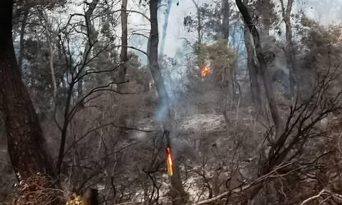 Πυρκαγιά στα Βίλια: Έρευνες της Πυροσβεστικής για εμπρησμό – Τα 4 «κλειδιά»