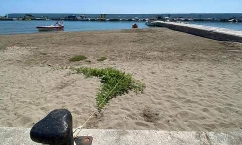 Ηράκλειο: Φύτρωσε καρπουζιά στην άμμο της παραλίας