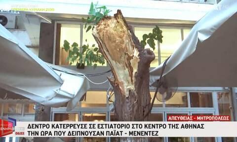 Δέντρο πτώση Παϊατ Μενέντεζ