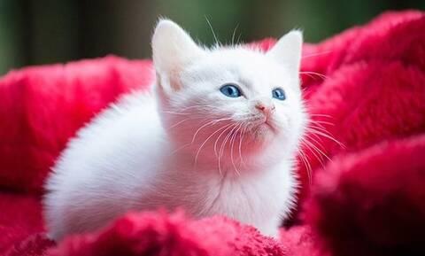 Γάτες: Έχουν τελικά 7 ψυχές;