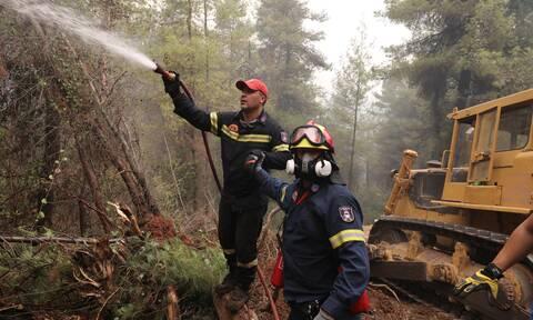 Βόρεια Εύβοια: Ενίσχυση 700.000 ευρώ στους δασικούς συνεταιρισμούς από το υπουργείο Περιβάλλοντος