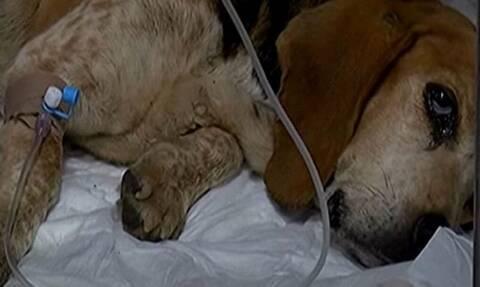 Κρήτη: Πέταξαν σκυλίτσα με όγκο σε φαράγγι