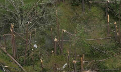 To 30% των ειδών δέντρων της Γης κινδυνεύουν με εξαφάνιση