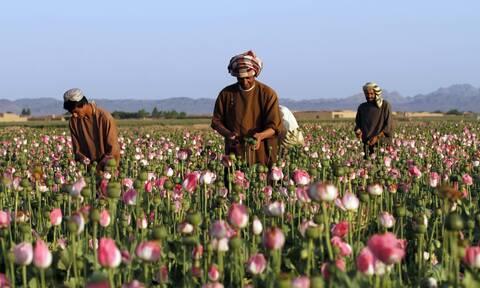 Ανίερη συμμαχία: Το ενδεχόμενο συνεργασίας των Ταλιμπάν με τα μεξικάνικα καρτέλ ναρκωτικών