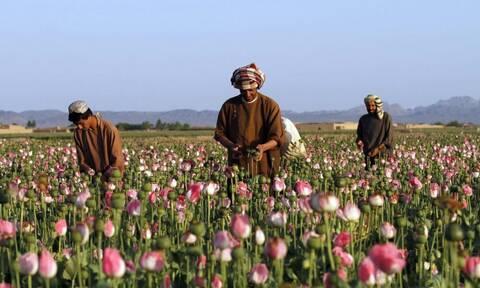 Αφγανιστάν: Φόβοι για συνεργασία των Ταλιμπάν με τα καρτέλ του Μεξικού για διακίνηση ηρωίνης