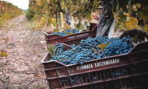 Κρασί: Το απόλυτο κουίζ γνώσεων για τους λάτρεις του οίνου