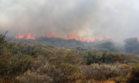 Φωτιά ΤΩΡΑ στην Κερατέα - Κοντά σε σπίτια οι φλόγες