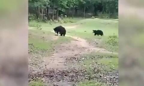 Iνδία: Αρκούδες...κλέβουν την μπάλα απο ματς και αποδεικνύονται «άσοι» στο ποδόσφαιρο