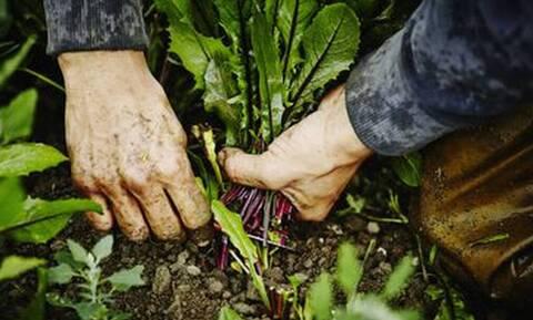 Βιολογικά τρόφιμα: Αλήθειες και ψέματα που πρέπει να γνωρίζεις