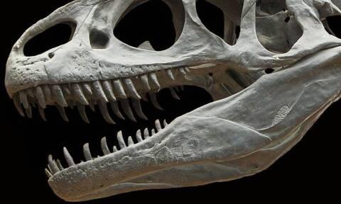 Έρευνα: Ανακαλύφθηκε πιο αιμοβόρος δεινόσαυρος και από τον T Rex