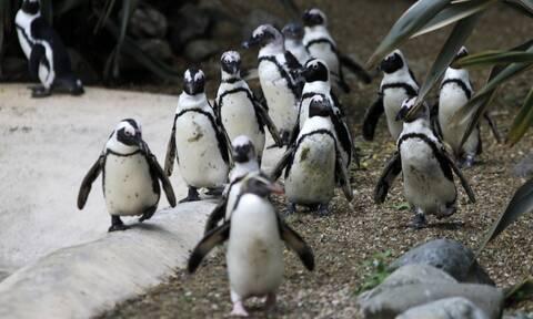 Σμήνος πιγκουίνων