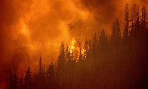 Οι πυρκαγιές του καλοκαιριού προκάλεσαν εκπομπές-ρεκόρ διοξειδίου του άνθρακα