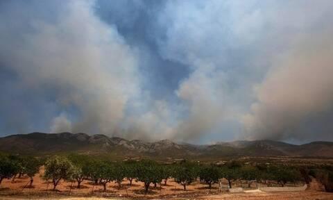 Τρίπολη: Οριοθετημένη η πυρκαγιά στην περιοχή Καλύβια Μεγαλόπολης