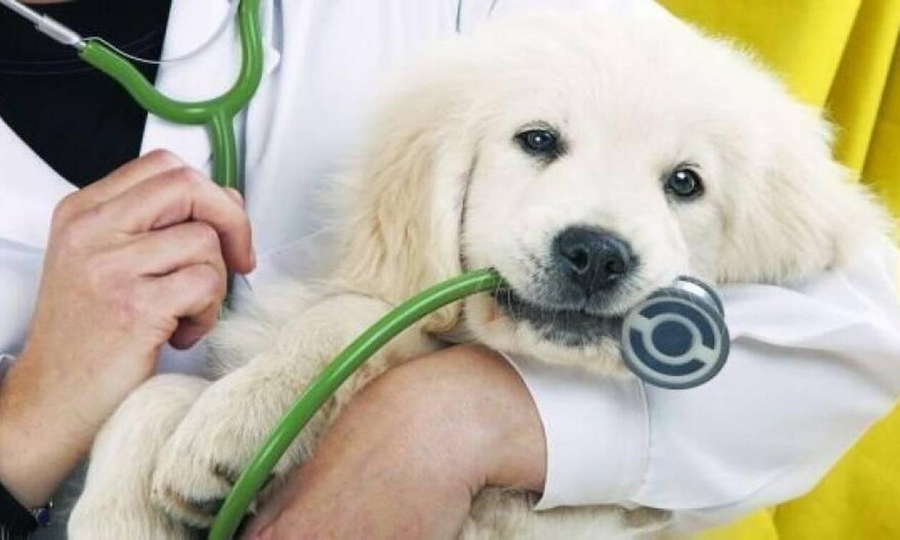 Προσλήψεις κτηνιάτρων στην Περιφέρεια Αττικής: Μέχρι πότε μπορείτε να κάνετε αίτηση