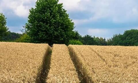 ΟΠΕΚΕΠΕ: Αυτή είναι η νέα εγκύκλιος για τους νέους αγρότες