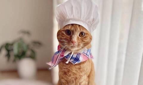 Αυτή η γάτα είναι ξεχωριστή: Της αρέσει να φτιάχνει κέικ και να ποζάρει