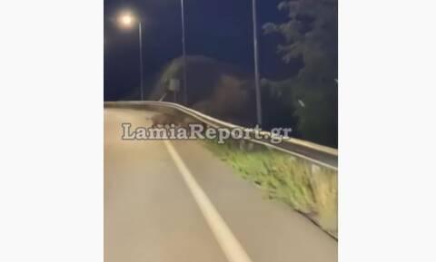 Λαμία: Κοπάδι από... αγριογούρουνα έκοβε βόλτες στον Περιφερειακό (vid)