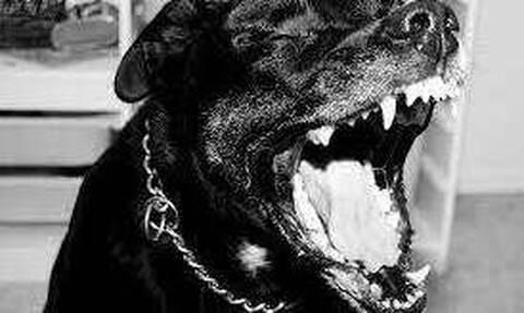 Νέο σοκ στη Θεσσαλονίκη: Πίτμπουλ επιτέθηκε σε 83χρονο - Ποινή... χάδι στον ιδιοκτήτη του σκύλου