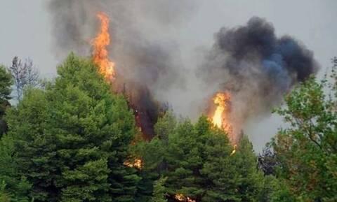 Φωτιά Κιλκίς: Σε πλήρη εξέλιξη η πυρκαγιά - Ενισχύθηκαν οι δυνάμεις της Πυροσβεστικής