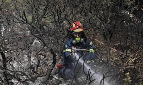 Φωτιά ΤΩΡΑ στην Κοζάνη