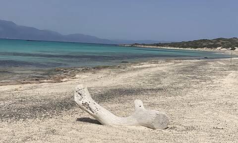 Κρήτη: Σε αυστηρό καθεστώς προστασίας η νήσος Χρυσή και το Μικρονήσι